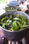 ayahuasca_cooking